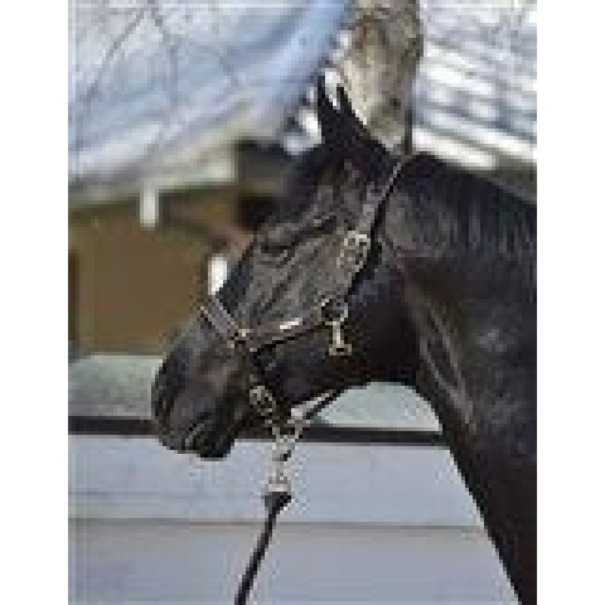 Rider by Horse Platinum Grime